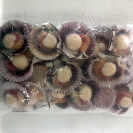 Precio Zamburiñas congeladas 1 Kg