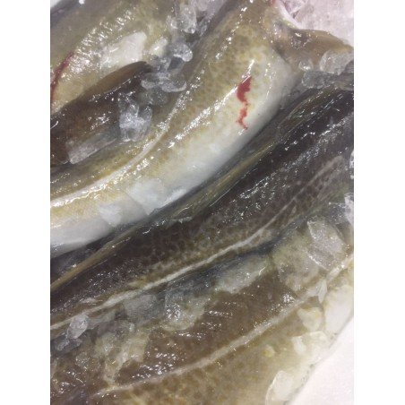 Precio Bacalao fresco de Galicia, Unidad