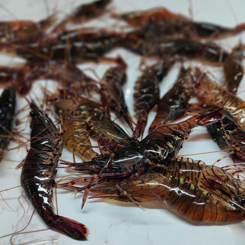 camarón fresco de Galicia