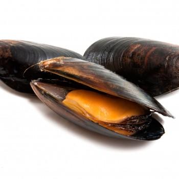 Carne de mejillón de Galicia congelado