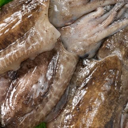 Sepia choco fresca de Galicia