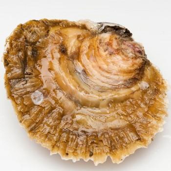 ostra de Galicia