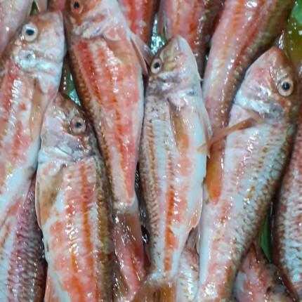 Salmonete fresco de Galicia