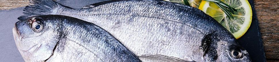 Comprar pescado azul o blanco de Galicia, frescos de máxima calidad